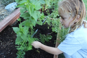 Identifying the carrot he planted these by seed.